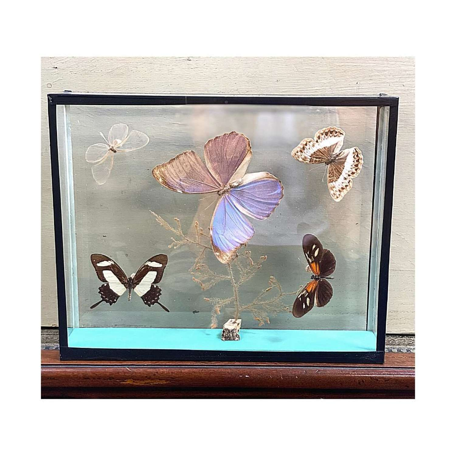 Clear cases collection of butterflies